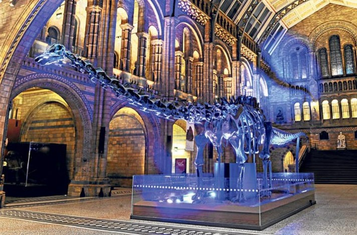 Natural History Museum: Sleeping with the dinosaurs