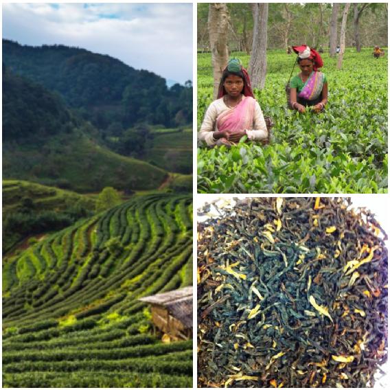 Rizières et thé d'Assam