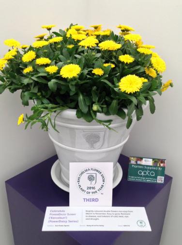 """Clematis chiisanesis """"Amber"""" remporte le prix de la plante de l'année"""