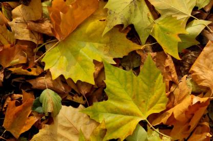 feuilles-nature-automne
