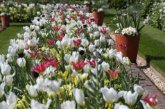 jardin-souvenir-diana-fleurs